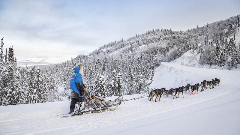 Squid Acres Kennel Dogsled Tours